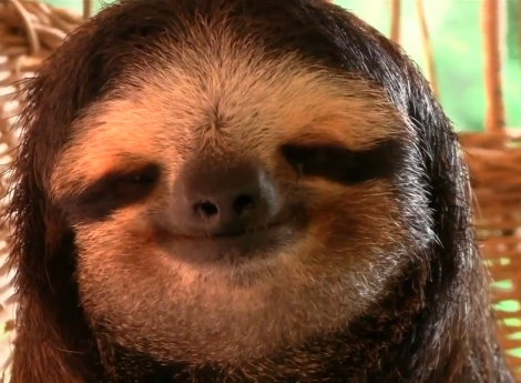 Smiling Sloth, Sloth, Future World Giving, World Happiness day, charity, philanthropy, happy, Well-being